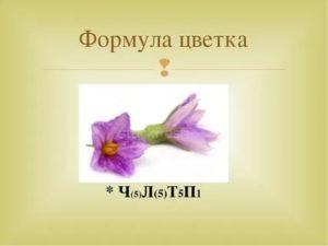 Формула цветка колокольчика