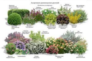 Схема посадки декоративных кустарников