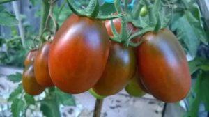 Самые вкусные и урожайные сорта помидоров