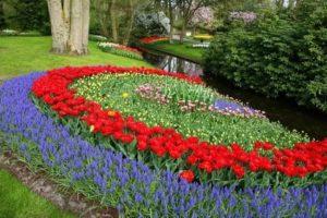Дизайн посадки тюльпанов