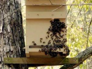 Как отпугнуть пчел