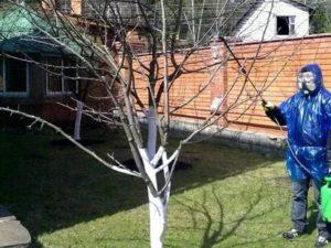 Опрыскивание медным купоросом весной