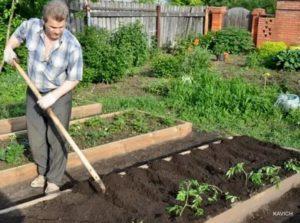 Подготовка грядки под помидоры весной