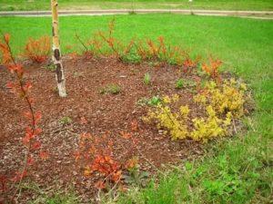 Посадка декоративных кустарников осенью