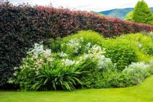 Живая изгородь из многолетних цветов