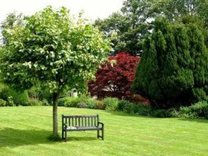 Деревья на газоне