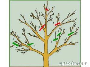 Обрезка яблонь видео