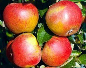 Самоплодные сорта яблонь