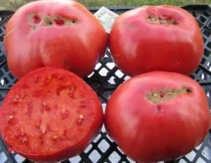 Сорта помидоров гигантов