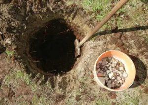 Посадочные ямы для яблони