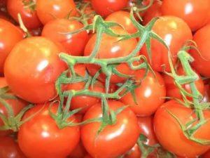 Новейшие семена томатов