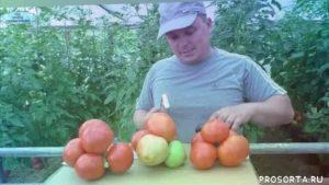 Самые урожайные сорта помидор в украине