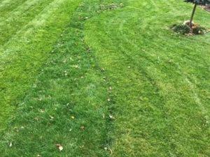 Посадить газон осенью