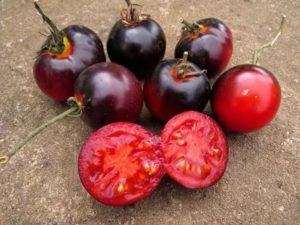 Синие сорта томатов
