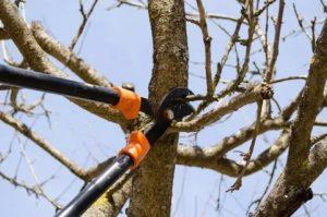 Обрезка деревьев фото