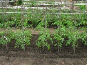 Грядки для помидор
