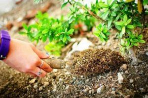 Какие растения удобряют почву