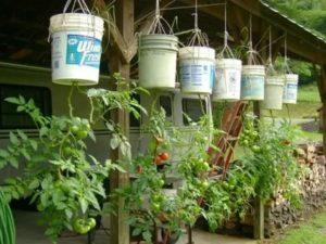 Выращивание помидоров вверх ногами