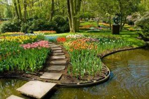 Ландшафтный дизайн цветы