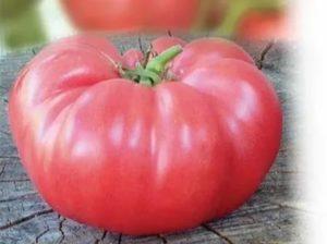 Самые крупные сорта томатов