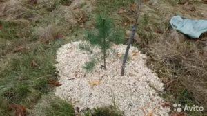 Что такое мульчирование почвы песком