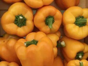 Голландские сорта овощей