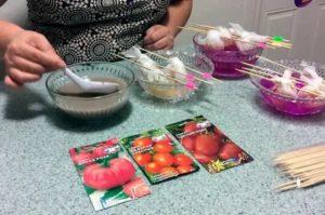 Обработка семян помидоров перед посевом
