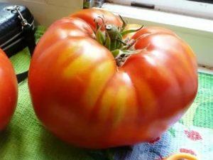 Самые крупные сорта помидор