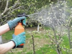 Медный купорос опрыскивание яблонь
