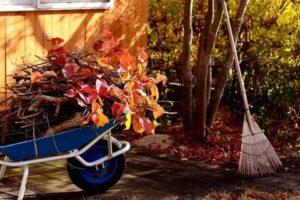Сад осенью уход