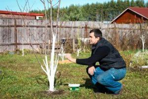 Как ухаживать за яблонями весной