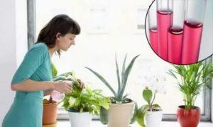 Можно ли марганцовкой поливать комнатные цветы