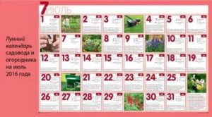 Лунный календарь прививка деревьев
