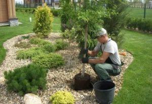 Как рассадить деревья на участке