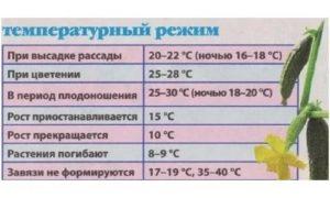 Оптимальная температура в теплице для помидор