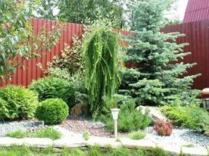Хвойные уголки в саду