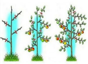 Обрезка яблонь летом видео