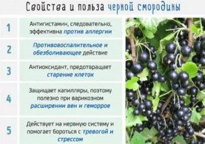 Лечебные свойства смородины черной