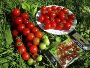 Хорошие сорта помидоров черри