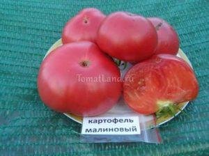 Сорт томата картофельный