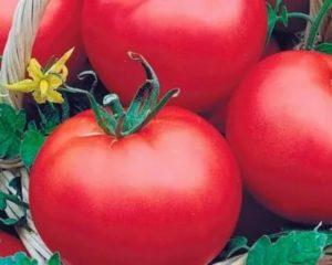Самые лучшие семена томатов