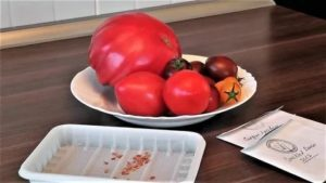 В чем хранить семена томатов