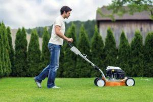 Когда стричь газон