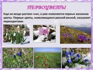 Весенние цветы список