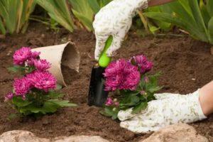 Посев цветов в грунт