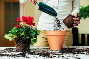 Как комнатные цветы сажать