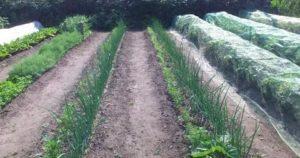 Огород по митлайдеру
