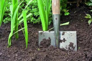 Улучшение почвы