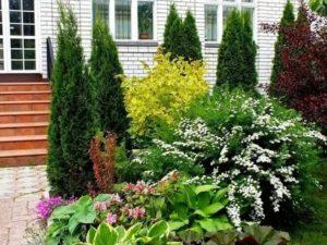 Сочетание хвойников с другими растениями