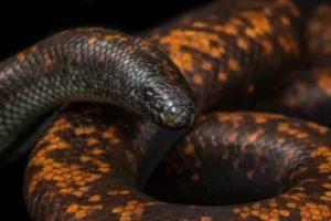 Толстые змеи